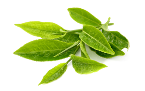 green-tea-zh